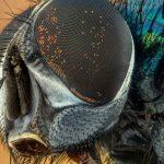 Mantén alejados a los insectos de tu hogar usando una aplicación en tu teléfono.